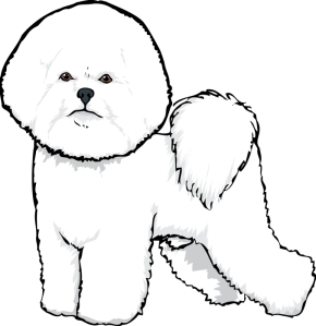 Paws To Talk Marshmallow the Bichon Frise: How do I let go